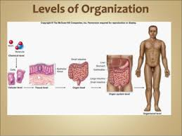 Human Anatomy And Physiology Chapter 1 Anatomy And Physiology Introduction Chapter 1 Notes