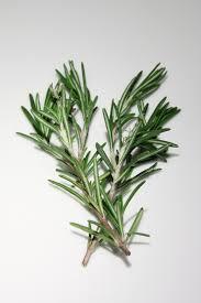 herbe cuisine images gratuites arbre herbe branche feuille fleur cuisine