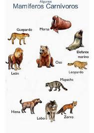 imagenes de animales carnivoros para imprimir animales carnívoros animales consumidores de carne carnivoros