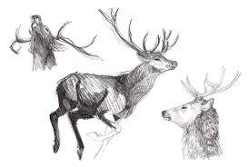 some deer helen dallat u0027s blog