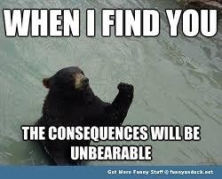 Funny Bear Meme - funny bear funny bear picture meme jpg inspirational sayings