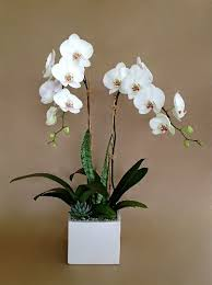 white orchid flower white orchid