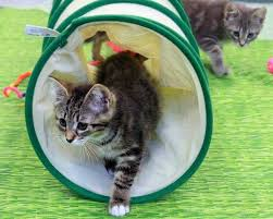 Family Pet And Garden Center - bay area pet and animal events check out zoovie nights