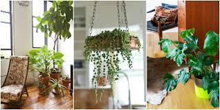 decorative indoor plants living room beautiful plant decoration in living room flower