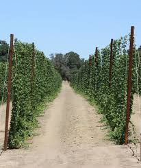 hop trellis jim u0027s supply company inc