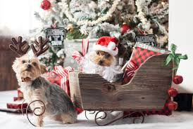 dog christmas cards a yorkie christmas the lilypad cottage