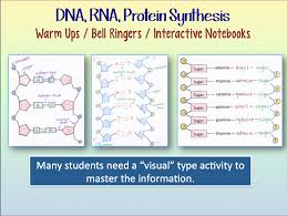 science stuff blog dna and rna and protein synthesis warm ups or