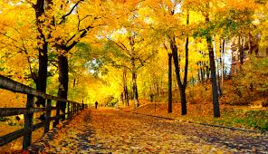 Autumn Colors Autumn U2014 Visitfinland Com