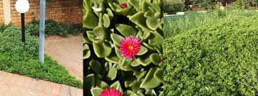 Water Borne Diseases In Plants Top 14 Water Wise Plants For Your Garden Diy Grounded Landscaping