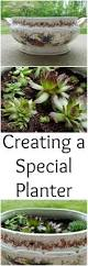 creating a special planter for your plants the spring mount 6 pack