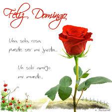 imagenes de amor para el domingo imagen de una hermosa rosa para un feliz domingo