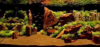 Aquascaping Rocks Ohko Stone The Planted Tank Forum
