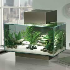 trendy home decorations fishbowl aquarium designs
