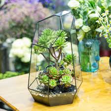 irregular tabletop succulent plants glass geometric terrarium box