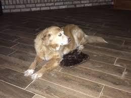 dog gets too small doggie bed but is u0027still grateful u0027 abc news