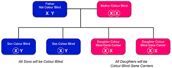 Colors That Color Blind Can See Inherited Colour Vision Deficiency U2014 Colour Blind Awareness
