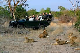 african safari car best african safari u0026 wildlife tours wild wings safaris