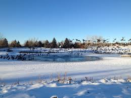 keep your pond open this winter