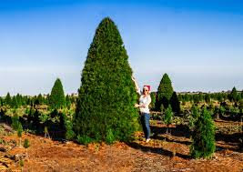 commercial real trees melbourne
