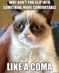 Grumpy Cat Coma Meme - grumpy cat grumpy cat pinterest grumpy cat cat and humor