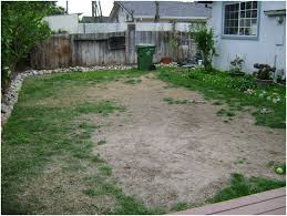 Backyard Ideas For Dogs Backyards Innovative Dog Friendly Backyards Without Grass