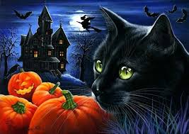 halloween cats and pumpkins black cat halloween pumpkin night