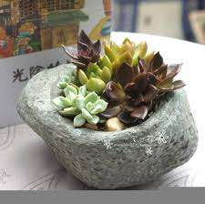 succulent arrangements indoor succulent arrangements flowering succulent plants cactus