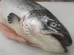 poisson a cuisiner les poissons les plus courants en cuisine
