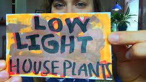 Best Plants To Grow Indoors In Low Light Growing Houseplants In Low Light Youtube