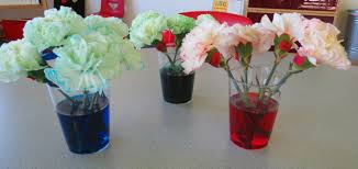 carnations food coloring www mindsandvines com