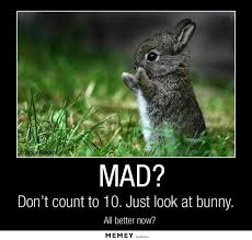 Angry Bunny Meme - bunny memes funny bunny pictures memey com
