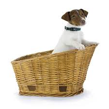 hand crafted bike baskets for dogs beach and dog co