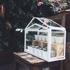 ikea terrarium greenhouse for my cactus cactus pinterest