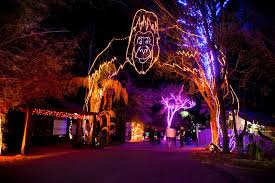 zoo lights houston prices things to do in san antonio this friday saturday and sunday