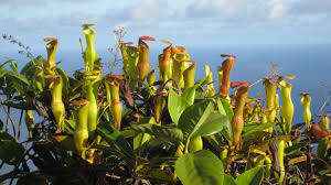 native plants of egypt invasive plant species shown to improve outlook for native species