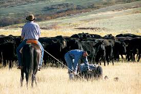 Montana How Far Can A Horse Travel In A Day images Ride on an authentic working cattle ranch in montana jpg