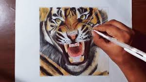 drawing a tiger animal drawing series 4 prismacolor pencils