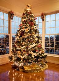 Decorated Christmas Tree Images by Homes Decorated With Christmas Lights Homes Photo Gallery