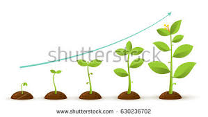 infographic planting tree seeds sprout ground stock vector