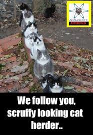 Herding Cats Meme - herding cats atheist logic fail