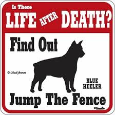 australian shepherd jumping fence cats and dogs blue heeler jump the fence sign