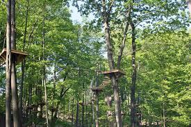 hours prepare for your tree top adventure treerunner adventure