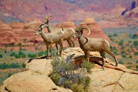 Utah wildlife tours images Southern utah hiking photography tours the wave grand canyon jpg
