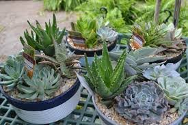 Low Light Succulents by Tropical Houseplants Archives Vanderwees Home U0026 Garden