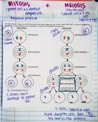 meiosis classroom demonstration u0026 activity secondary science