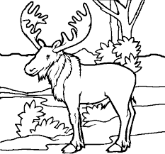 59 free coloring pages animals animals printable coloring pages