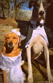 saved by dogs dog weddings fund raiser or just plain fun