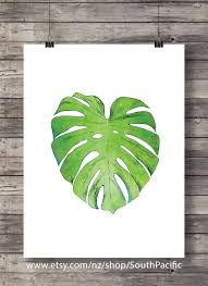 monstera leaf fruit salad plant swiss cheese plant tropical