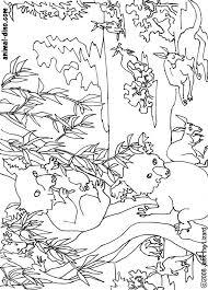 koala bear coloring page animal coloring page koala bear print size jack the lizared