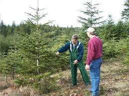 Washington Christmas Tree Farms - what makes a great christmas tree and how can i grow one